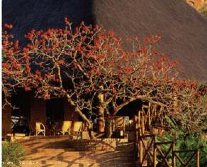 Ntshondwe Resort & Conference Centre (iThala)